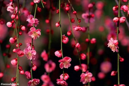 تصاویر طبیعت برای تقویم (فصل بهار)