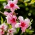 تصنیف فصل بهاره - داوود مهذبیه